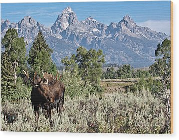 Moose And The Grand Wood Print by Rodney Cammauf