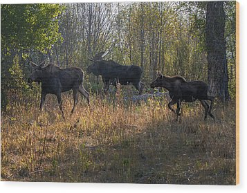 Moose Family Wood Print by Ronald Lutz