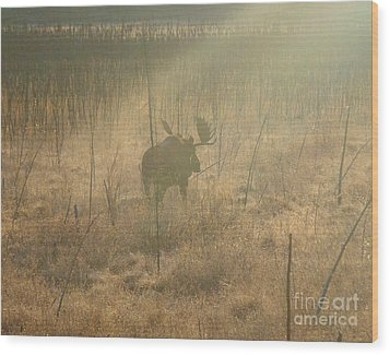 Moose On A Mission Wood Print by Adam Owen