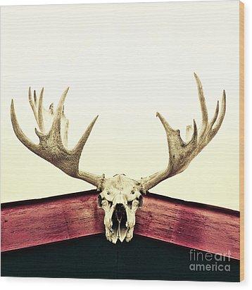 Moose Trophy Wood Print by Priska Wettstein