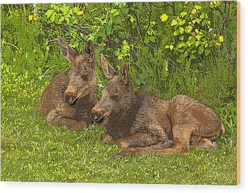 Moose Twins- Abstract Wood Print by Tim Grams