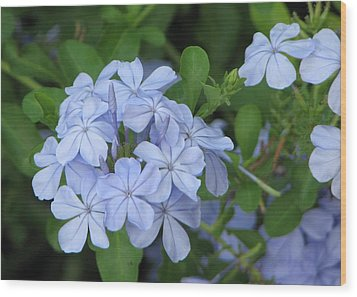 Wood Print featuring the photograph Morning Blues by John Glass