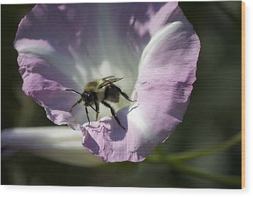 Morning Bumblebee Wood Print