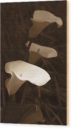 Morning Calla Lilies Sepia Wood Print by Jennie Marie Schell