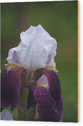 Morning Dew Iris Wood Print by Rebecca Overton