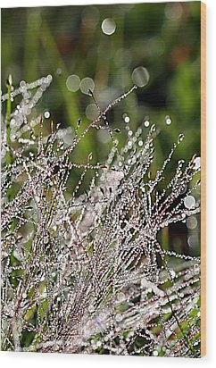 Wood Print featuring the photograph Morning Dew by Lauren Radke