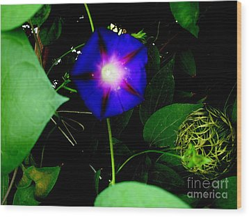 Morning Glory Glory Wood Print by Marilyn Magee