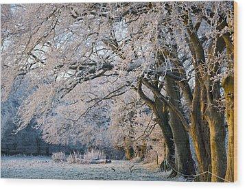 Morning Glory Wood Print by Rob Hemphill