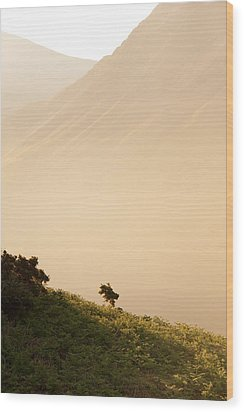 Morning Haze Wood Print by Svetlana Sewell
