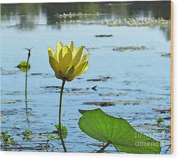 Wood Print featuring the photograph Morning Lotus Pond by Deborah Smith