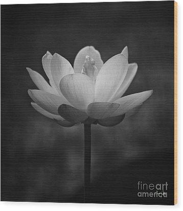 Morning Lotus Wood Print by Scott Pellegrin