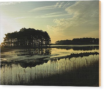 Morning On Assateague Island Wood Print by Steven Ainsworth