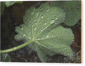 Morning Rain Wood Print
