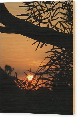 Wood Print featuring the photograph Morning Sun And Mesquite by Louis Nugent
