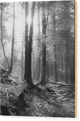 Wood Print featuring the photograph Morning Sun by Mary Almond