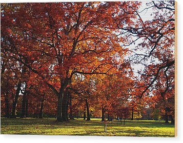 Morton Arboretum In Colorful Fall Wood Print by Paul Ge