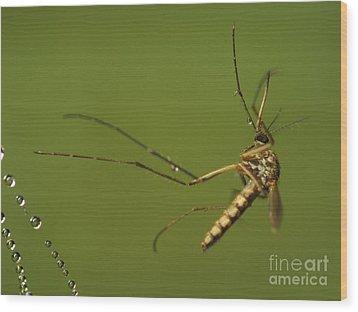 Mosquito Wood Print by Odon Czintos