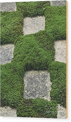 Moss And Stepping Stones Wood Print by Rob Tilley