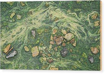 Wood Print featuring the photograph Moss Mustache  by Britt Runyon