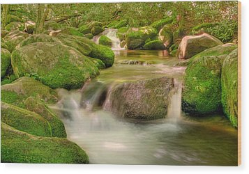 Mossy Beauty Wood Print by Cindy Haggerty