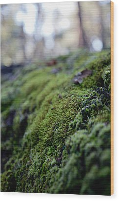 Mossy Log Wood Print