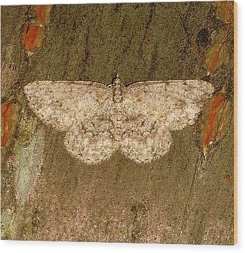 Wood Print featuring the photograph Moth by Bruce Carpenter