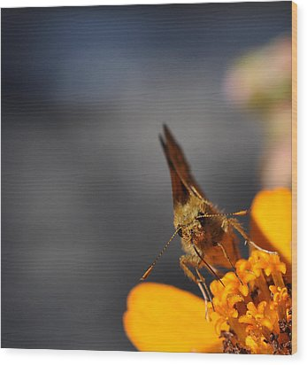 Wood Print featuring the photograph Moth On A Zinnia Blossom by Ronda Broatch