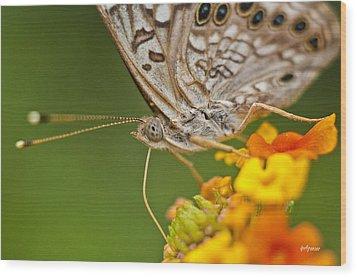 Moth On Flower Clusters Wood Print by Lisa  Spencer