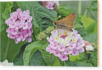 Moth On Lantana Wood Print by Becky Lodes