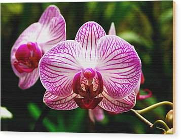 Wood Print featuring the photograph Moth Orchid by Pravine Chester