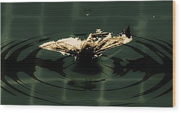 Wood Print featuring the photograph Moth Ripples by Jessica Shelton