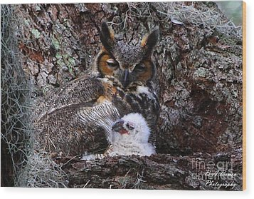 Mother And Baby Owl Wood Print by Barbara Bowen