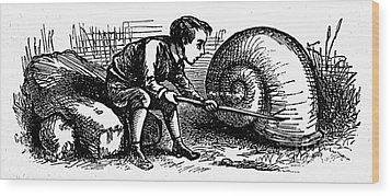Mother Goose: Snail Wood Print by Granger