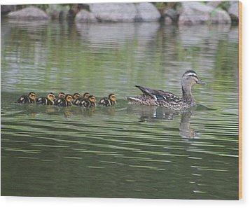 Mother Mallard And Ducklings Wood Print by Jeanne Kay Juhos