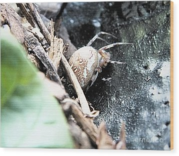 Mother Spider Wood Print by Tammy Herrin