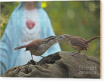 Wood Print featuring the photograph Mother Wren Feeding Juvenile Wren by Luana K Perez