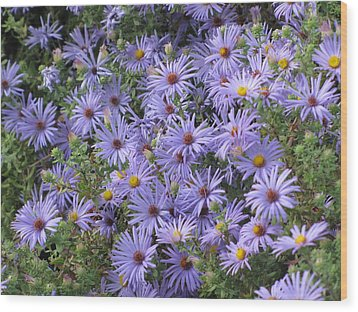 Wood Print featuring the photograph Mother's Asters by Shawn Hughes