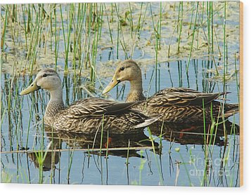 Mottled Duck Pair Wood Print