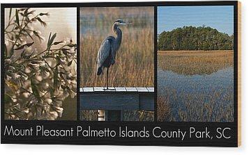 Mount Pleasant Palmetto Islands County Park  Wood Print by Melissa Wyatt