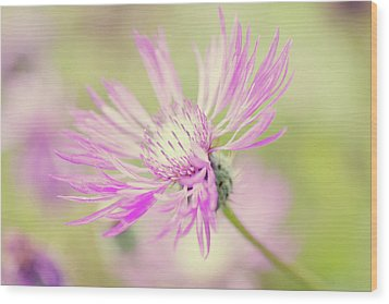 Mountain Cornflower Pink Wood Print by Leentje photography by Helaine Weide