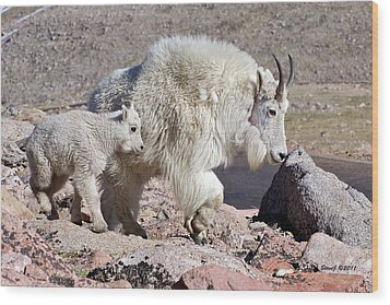 Mountain Goat Momma With Kid Wood Print by Stephen  Johnson