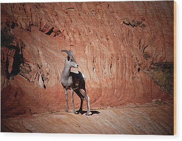 Mountain Goat Zion National Park Wood Print by James Bethanis