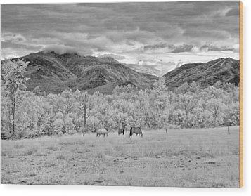 Mountain Grazing Wood Print by Joann Vitali