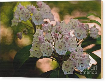 Mountain Laurel Flowers 2 Wood Print