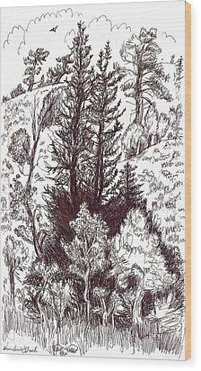 Mountain Pines And Aspen Field Sketch Wood Print by Dawn Senior-Trask