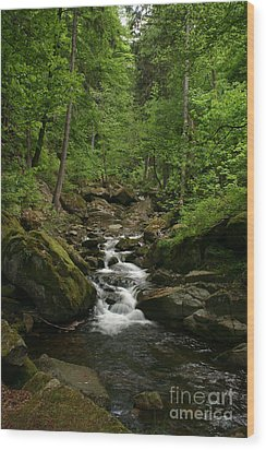 Mountain Stream Wood Print by Torsten Dietrich