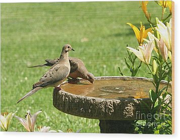 Wood Print featuring the photograph Mourning Doves by Jack R Brock