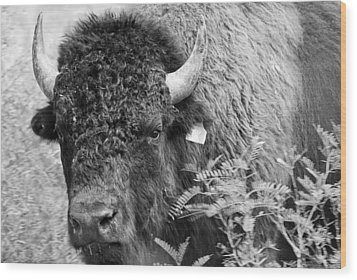 Mr Goodnight's Bison Wood Print by Melany Sarafis