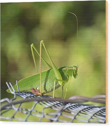 Wood Print featuring the photograph Mr Grasshopper by Mary Zeman