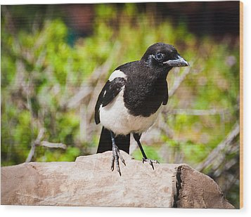 Mr. Magpie Wood Print by Cheryl Baxter